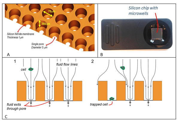Sorting individual cells in the microwell chip