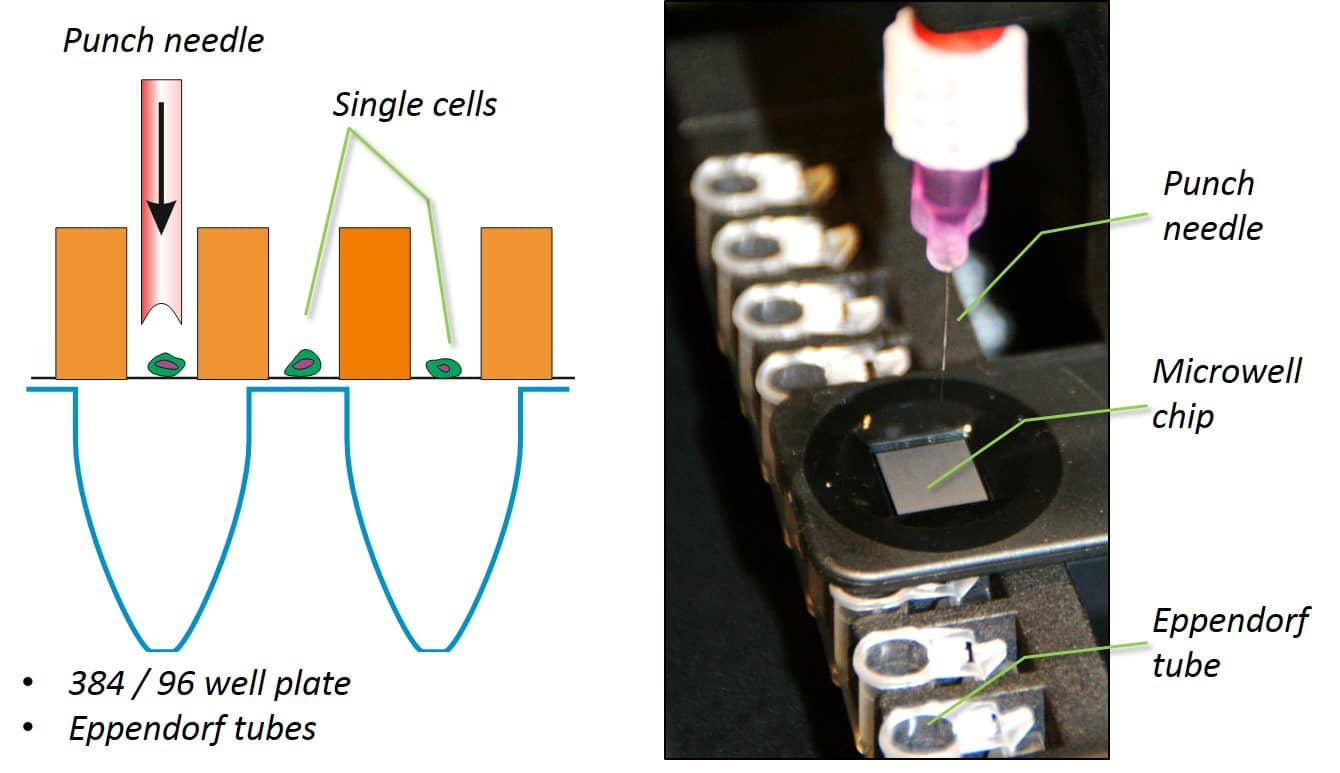 Isolate single cells from the microwell chip with a Punch needle