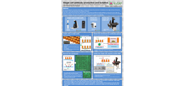 Single cell antibody production and isolation